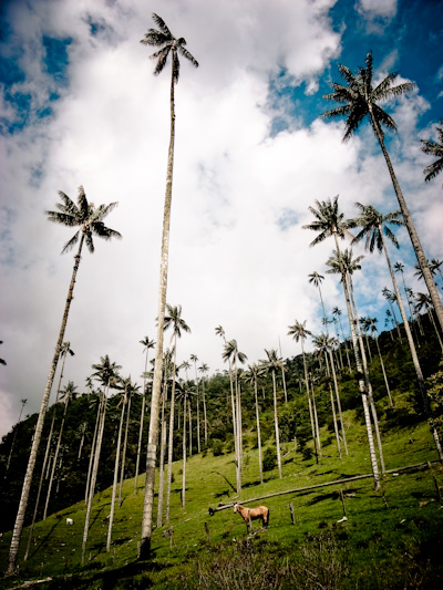 A good place to chill: El Valle de Cocora