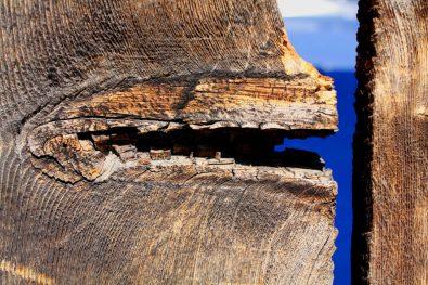 Wooden Monster, Michael Dunn