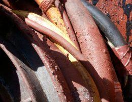 Bright hoses, Paula Cell