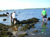 Gathering of rockweed.