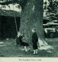 The London Grove white oak, 1933 postcard. Courtesy of Scott Wades, pabigtrees.com