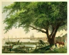 """The City & Port of Philadelphia"" showing the Great Treaty Elm (Birch's Views of Philadelphia, 1800)."