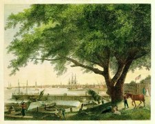 """The City & Port of Philadelphia"" showing the Great Treaty Elm (Birch's Views of Philadelphia, 1800)."