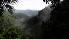 The Monteverde Cloud Forest Reserve is an international model for conservation.