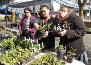 Native Plant Sale, shoppers. March 25th, 2017