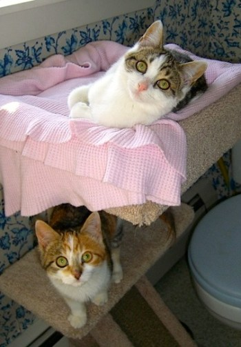 Two Calico Kittens
