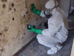 Best mold removal company