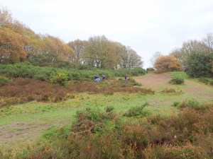Autumn Gorse Clearing