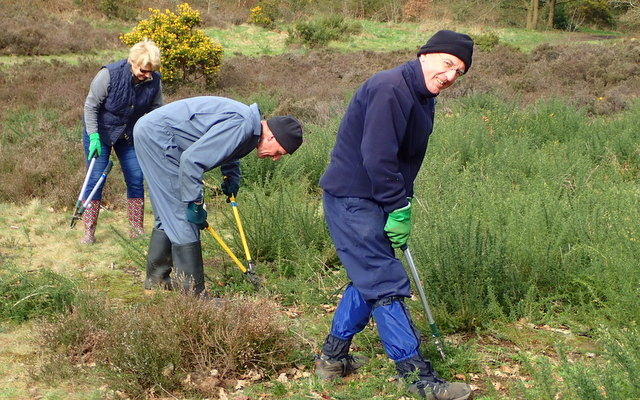 Gorse Clearing
