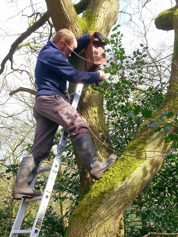 Nest Box Installation