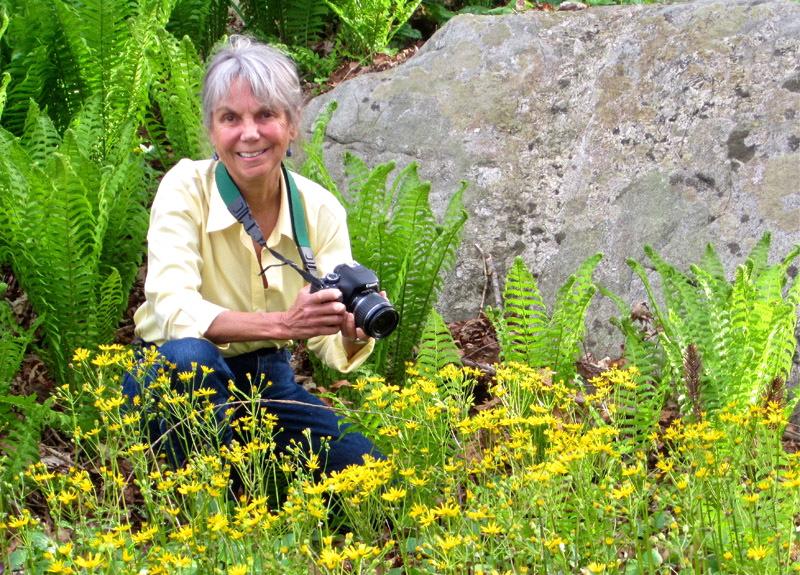 smCarol photographing golden ragwort 01