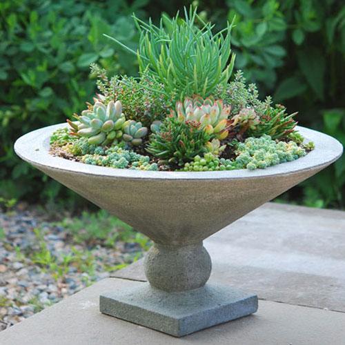 succulent.martini500