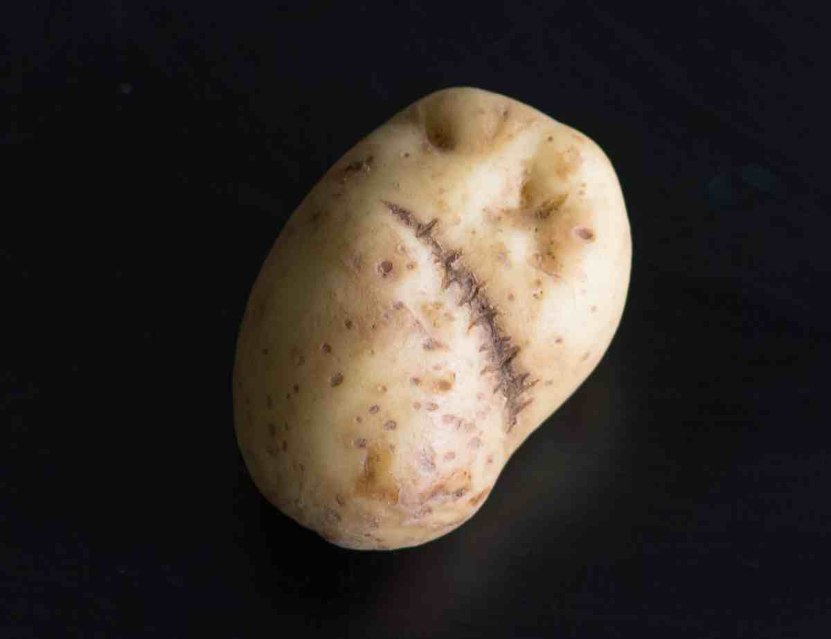 Frankenstein's Potato. A very special, scary, Halloween potato.