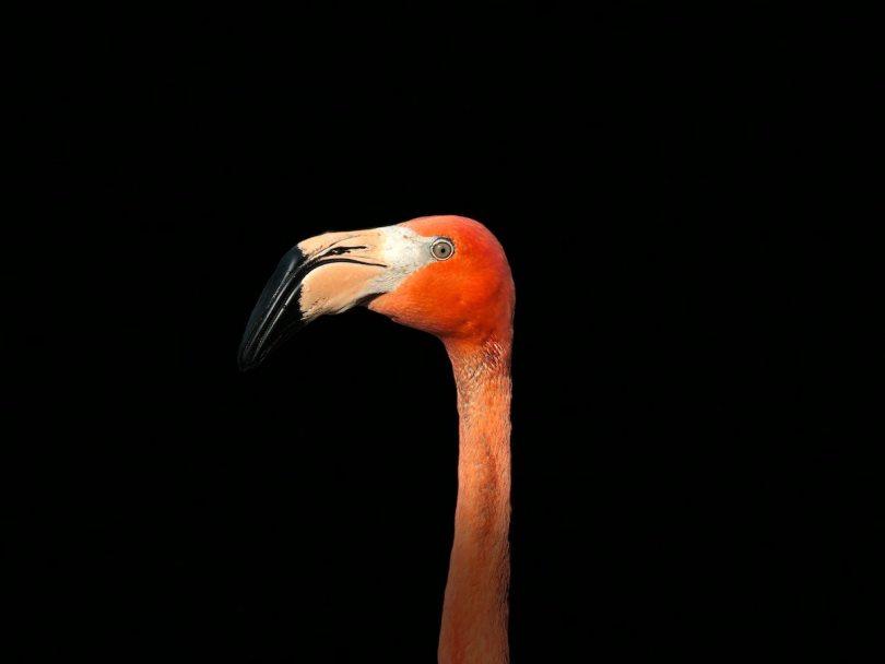 Flamingo FI