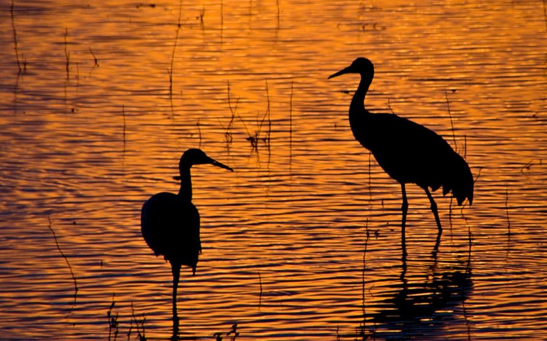 Crane Serenity