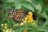Dem Schmetterling so nah