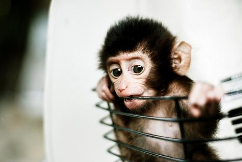 Babyaffe (Foto: Mohd Khomaini BinMohd Sidik/Flickr)