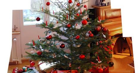 Weihnachtsbaum (Foto: habi/Flickr)