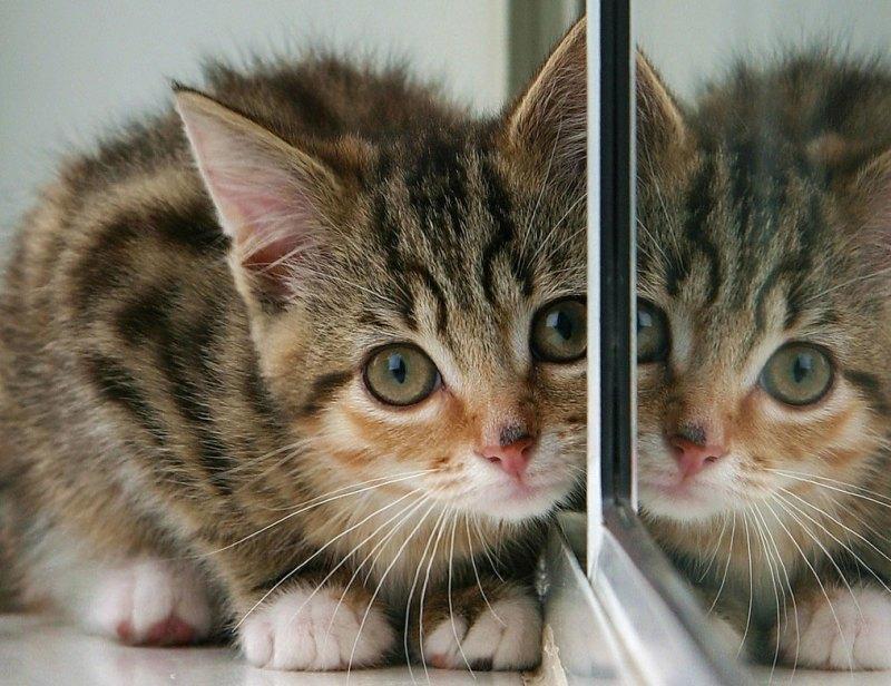 Katze (Bild: BigTallGuy/Flickr)