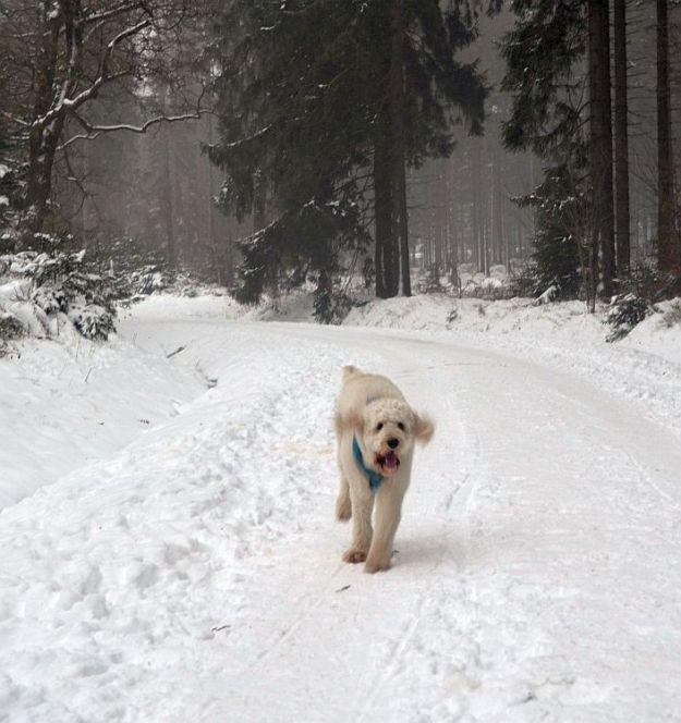 Lotta Winter