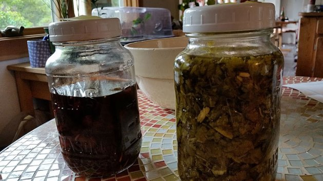 Canning jars in which herbs and fruit chunks are infusing. (Dates of preparation are are on the lids, not shown.)