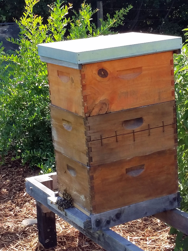 French Laundry Garden beehive.