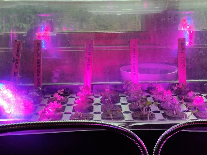 Propagation tray showing seedlings and labels.