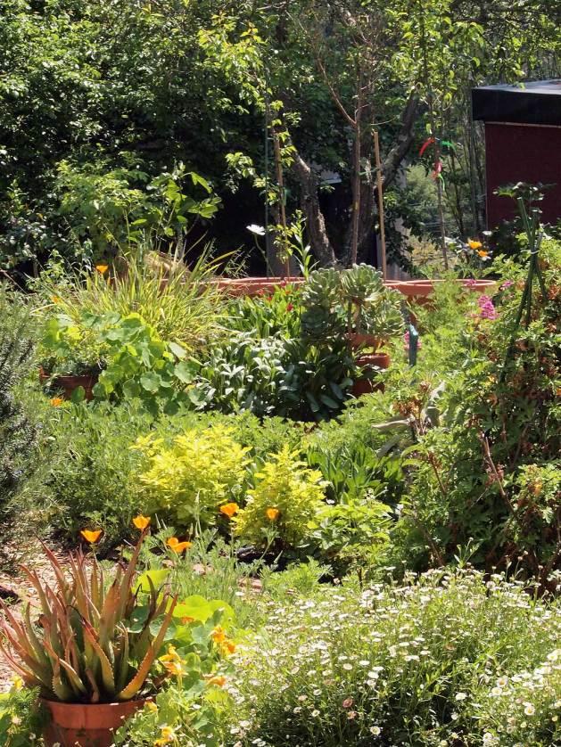 The garden, April 9, 2017
