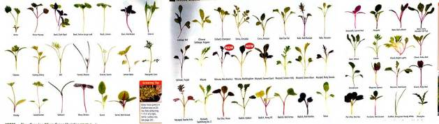Johnny's Selected Seeds, microgreens comparison.