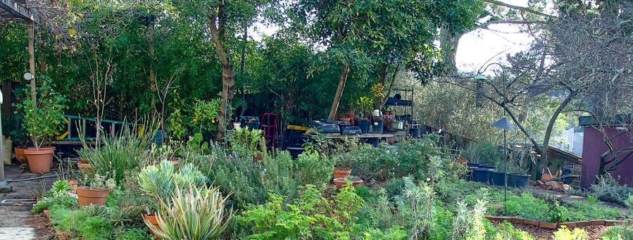 January garden detail