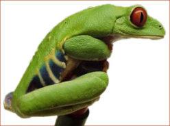 Froggblog
