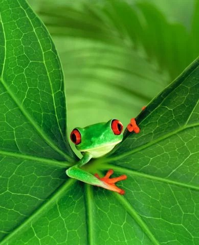The frog says hello while staring at you
