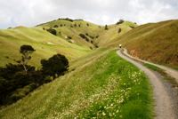 chemin randonnée nord Nouvelle-Zélande