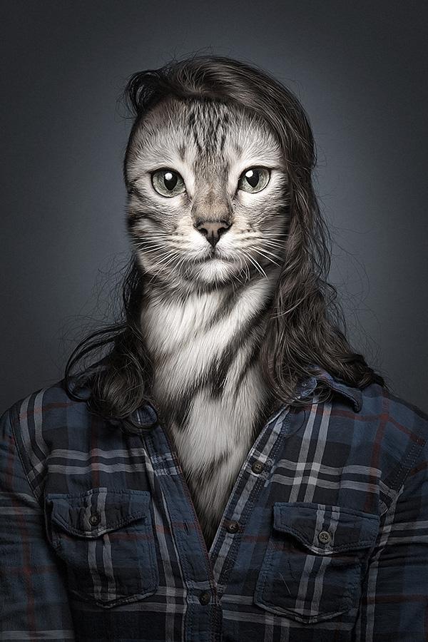 undercats 1 Perro y gatos vestidos como humanos por Sebastian Magnani