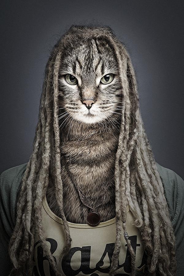 undercats 4 Perro y gatos vestidos como humanos por Sebastian Magnani