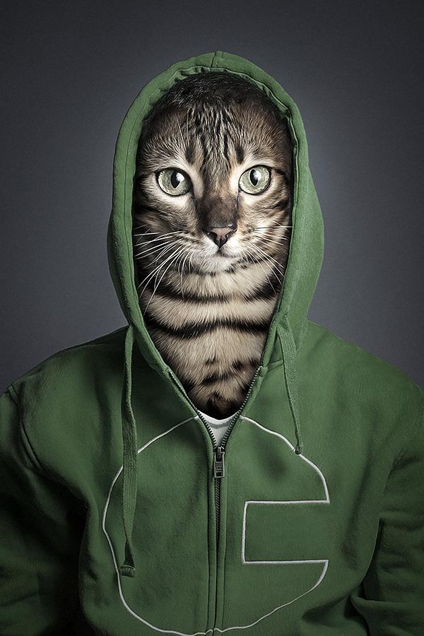 undercats 5 Perro y gatos vestidos como humanos por Sebastian Magnani