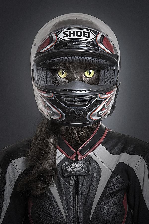 undercats 6 Perro y gatos vestidos como humanos por Sebastian Magnani