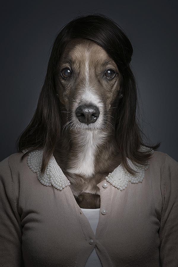 underdogs 4 Perro y gatos vestidos como humanos por Sebastian Magnani