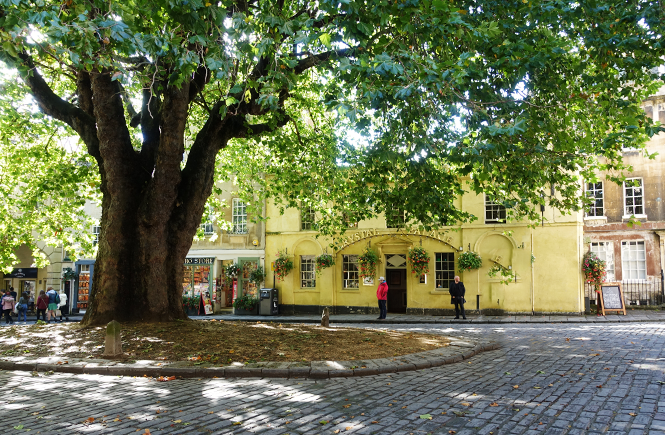 Photo of a large tree in the center of the town square surrounded by shops in Bath, England.
