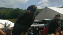 Le faucon sur son perchoir
