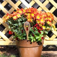 Turkey Planter