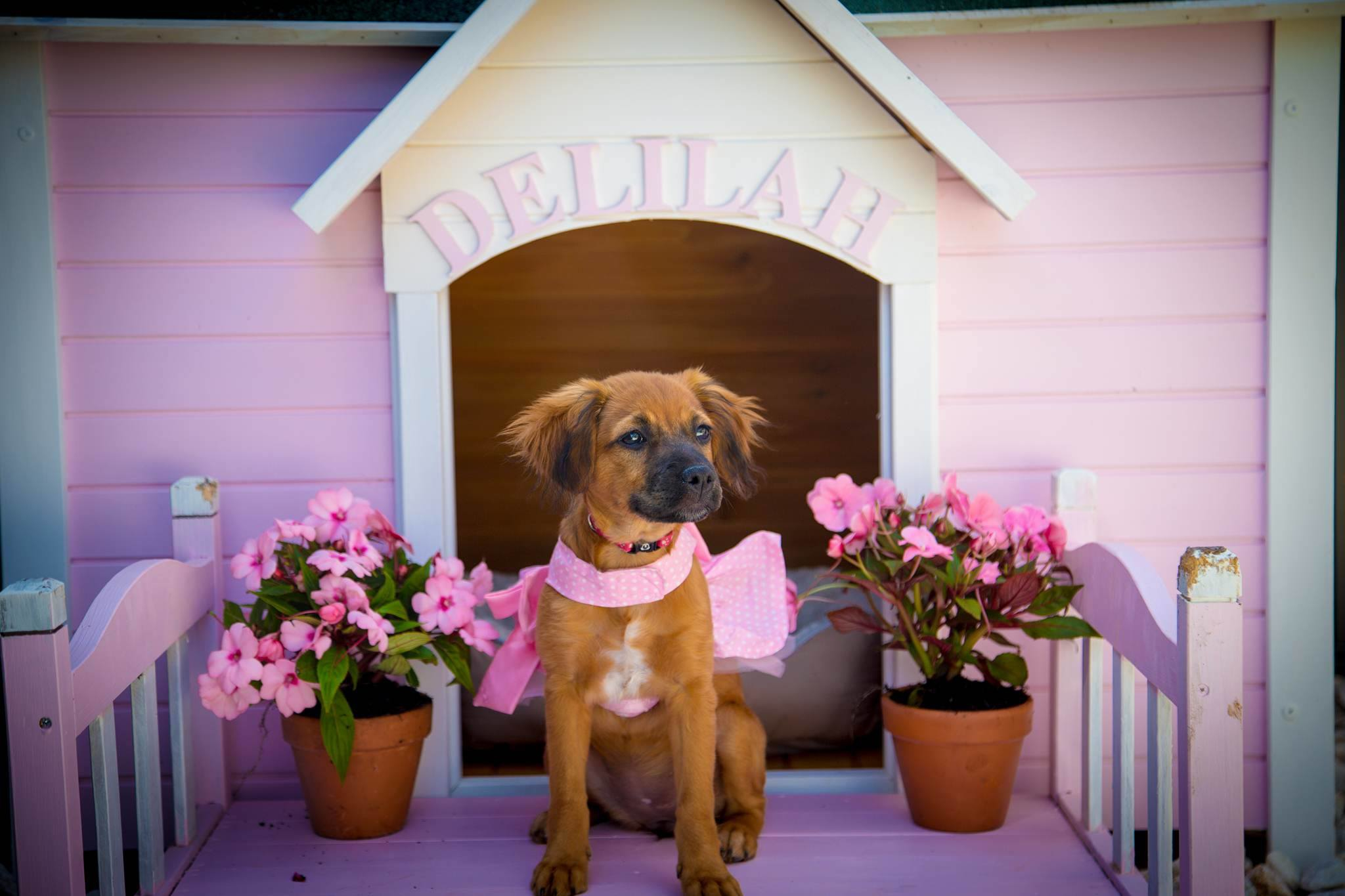 Princess Delilah's Kennel
