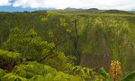 Alakahi Falls from the Kohala Forrest Reserve lookout in Waipio