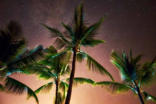 Palm trees standing tall amongst a starry Hawaiian night