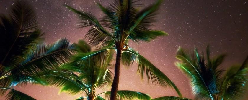 Palm trees standing tall amongst a starry Hawaiian night