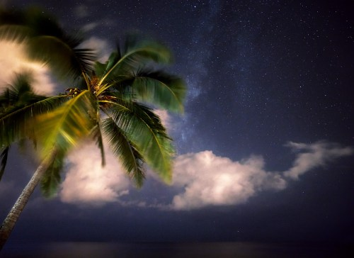 A palm tree in front of a beautiful starry night sky