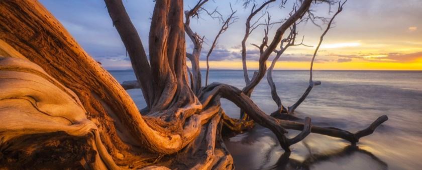 Sunset of a fallen tree along the Honoapiilani Hwy, Maui