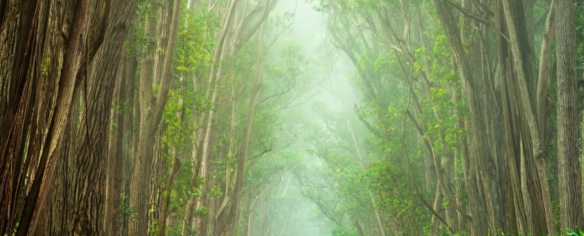 Beautiful rainy and foggy landscape photograph