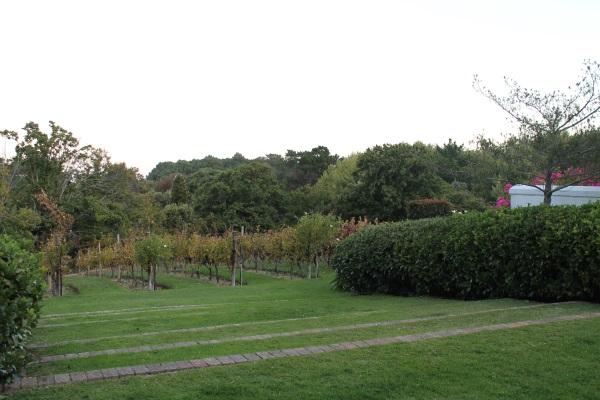 cellars_garden2