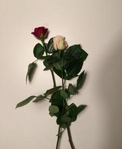 Pszczyna roses